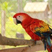 Buy Macaw Parrots Online
