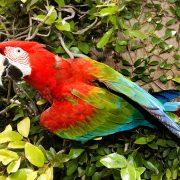 macaw_rainbow