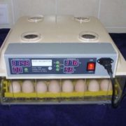 48 egg incubator