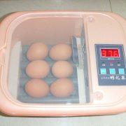 6 egg incubator