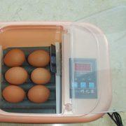 6 egg incubator 2