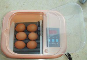 buy parrot egg incubator online